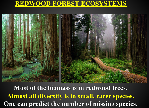 photo of redwood forest ecosystem