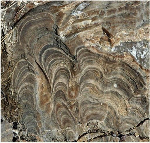 photo of stromatolites